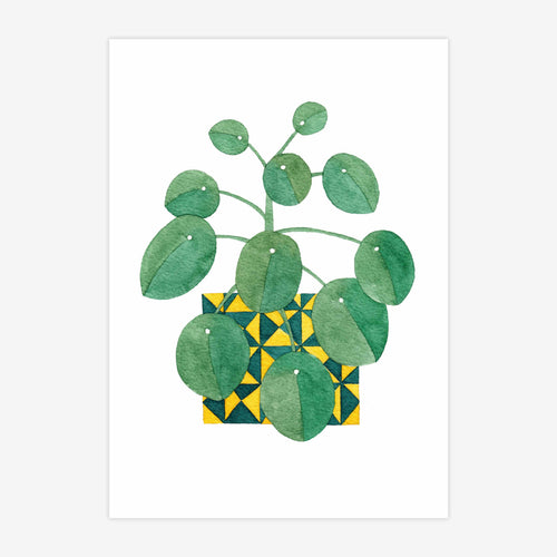 Chinese Money Plant A5 Print