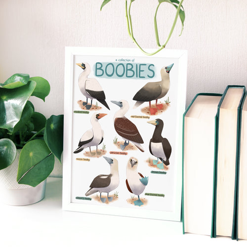 A Collection of Boobies Print