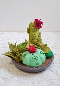 Cacti and Succulent Tray No.1