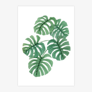 Swiss Cheese Plant Print