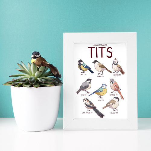 A Collection of Tits A4 print
