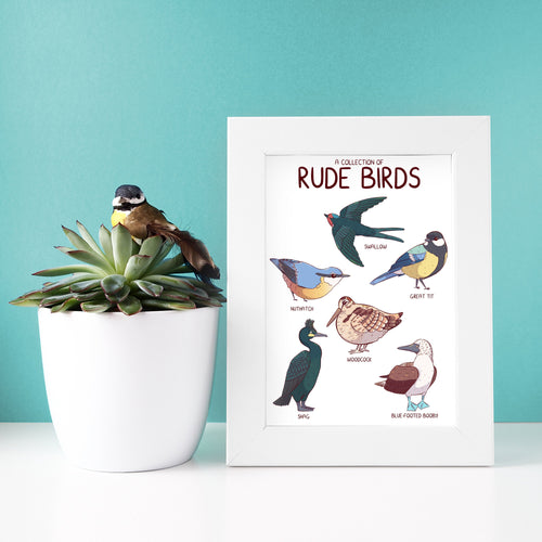 Collection of Rude Birds