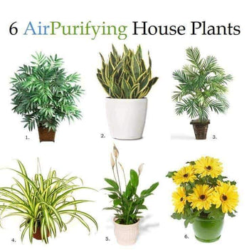 6 Different Types of Air Purifying House Plants