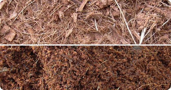 Hydrated Coco Peat Coarse and Fine Grade Side by Side