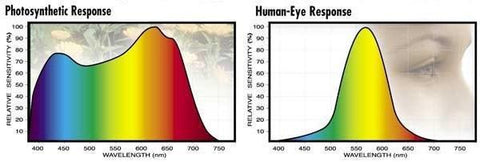 Graphs Comparing the Wavelengths Plants Respond to vs. the Wavelengths the Human Eye Responds To