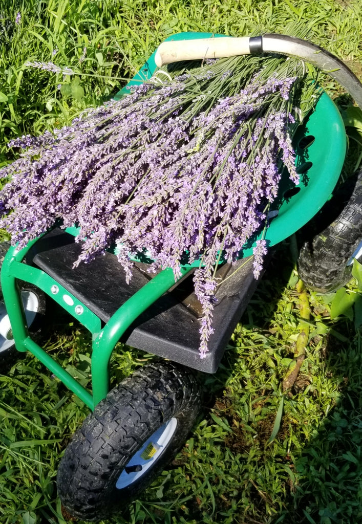Sleepy Bees Lavender Farm Spring/Summer 2019 Catch Up