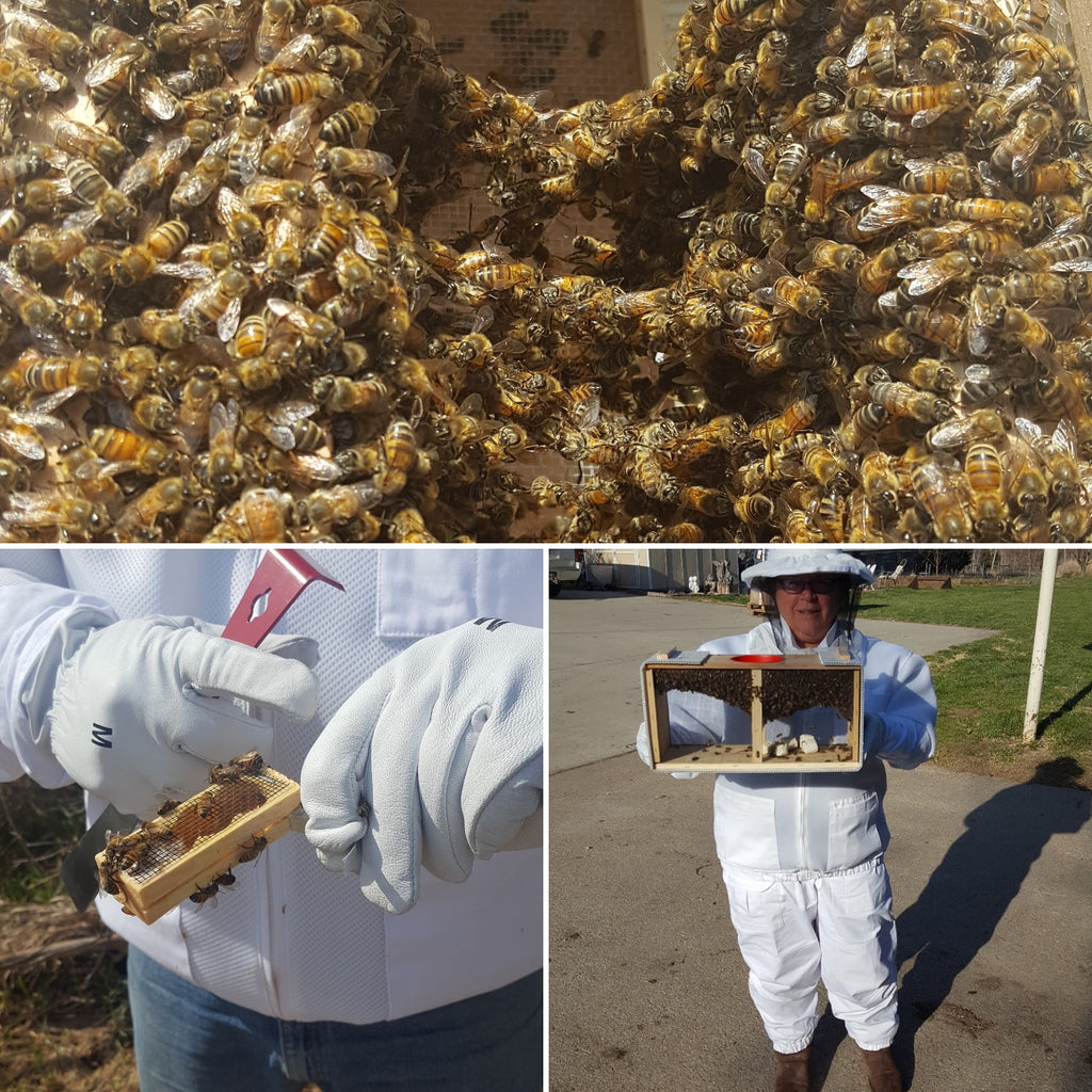 The Bees Are Here!