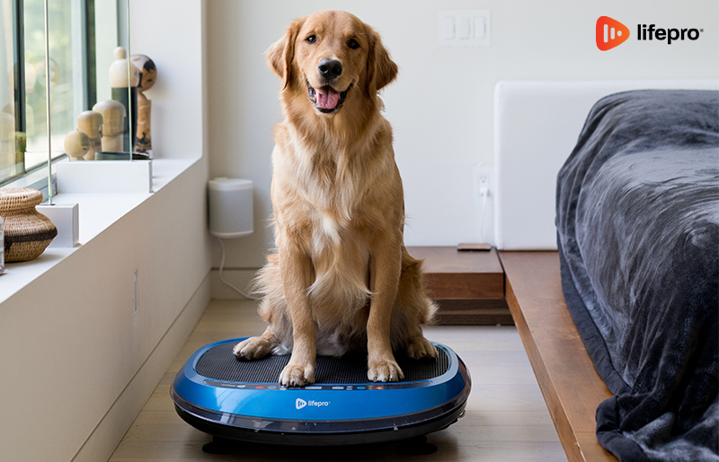Vibration Plates: Which Price Range Will Meet Your Needs?