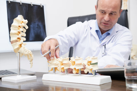 Doctor Studying The Bone