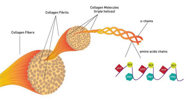 Collagen Peptide Benefits