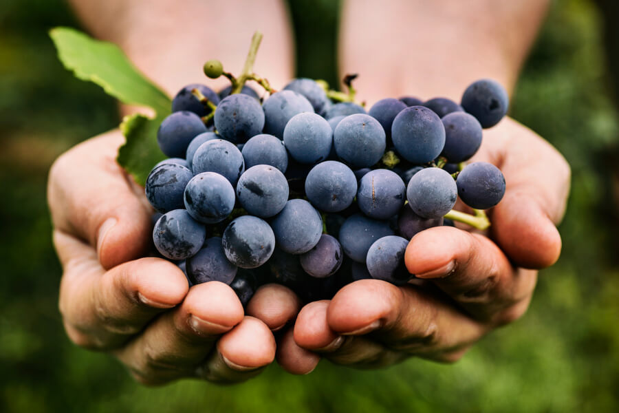 The power of grape seed extract
