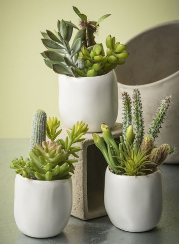 POTTED SUCCULENT - Treehouse Gift & Home
