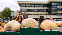 Top Three Giant Pumpkins, Harvestfest 2018