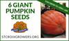 Atlantic Giant Pumpkin Seed Pack: 6 seeds from 1000lb+ pumpkins