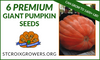 Giant Pumpkin Seed Collection: 1800lb Premium Package, 6 seeds from 1800lb Pumpkins!