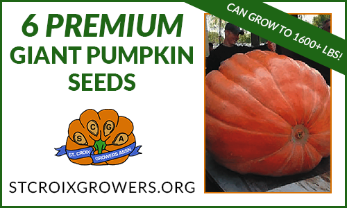 Giant Pumpkin Seed Collection: 1600lb Premium Package, 6 seeds from 1600lb Pumpkins!