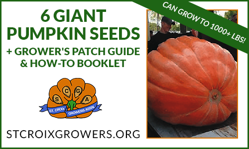 Atlantic Giant Pumpkin Seed Pack with Grower's Patch Guide & How-To Booklet
