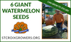 Giant Watermelon Seed