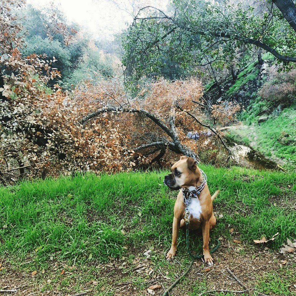 Our Favorite Fall Dog Hikes in LA