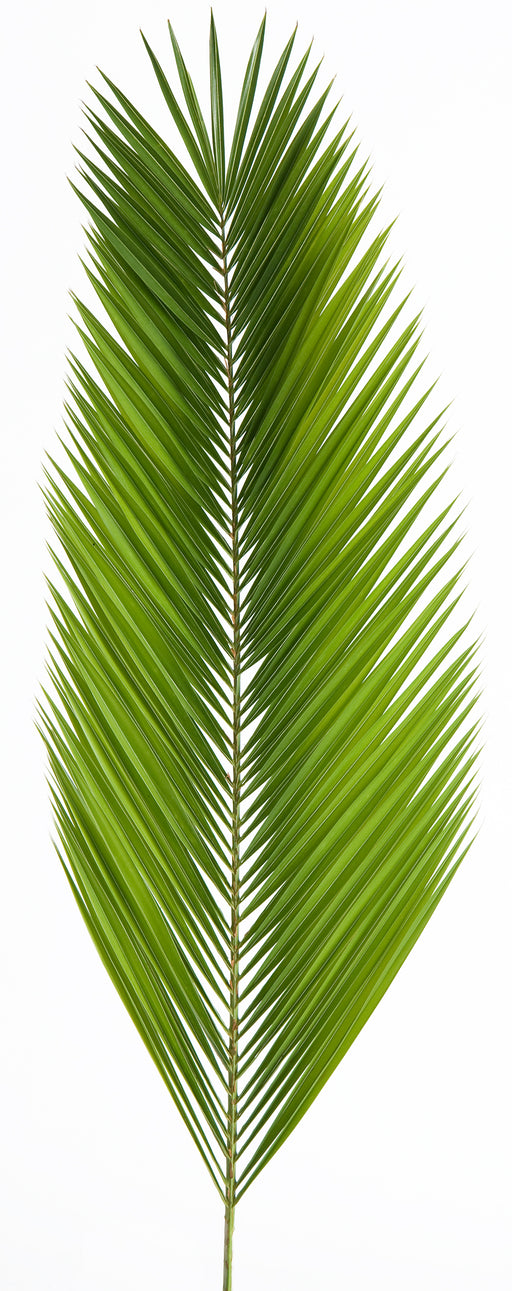 Palm Altar Décor - Date Palm
