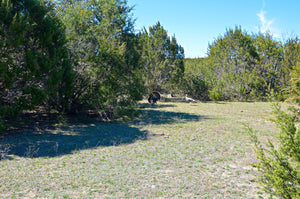 """Little piece of Heaven""  308+/- Acres with Home in Lampasas County , Texas"