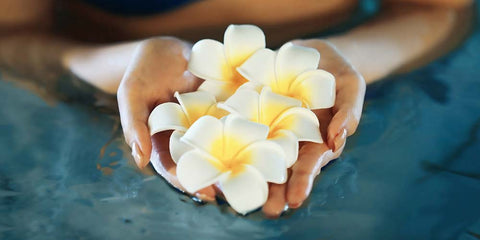 plumeria flower in hands