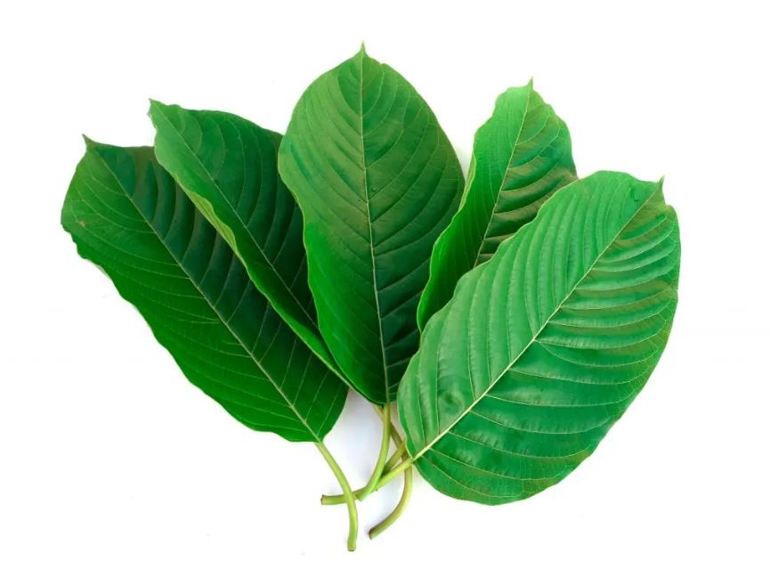 Looking For The #1 Best Kratom For Sale?