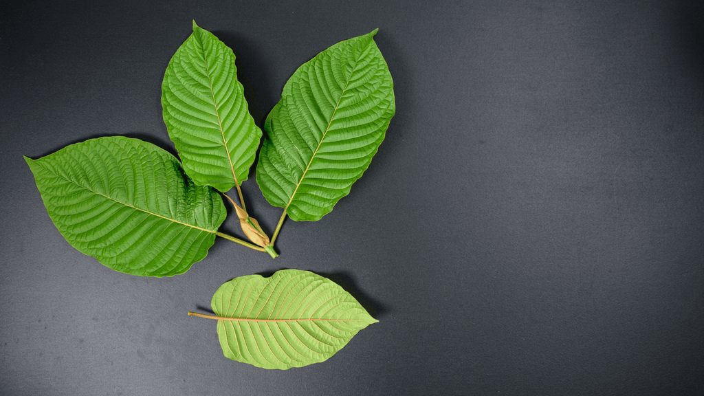Best 5 Kratom Strains for Anxiety
