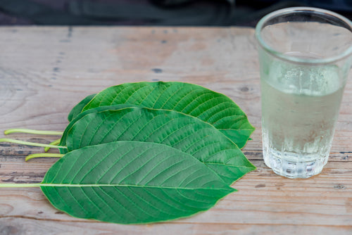 [4 Main Factors] How Long Do The Effects of Kratom Last?