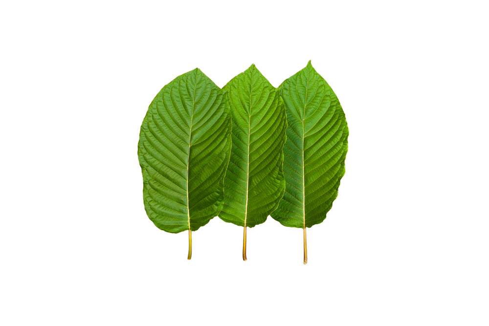 Which Kratom Has The Most Alkaloids?