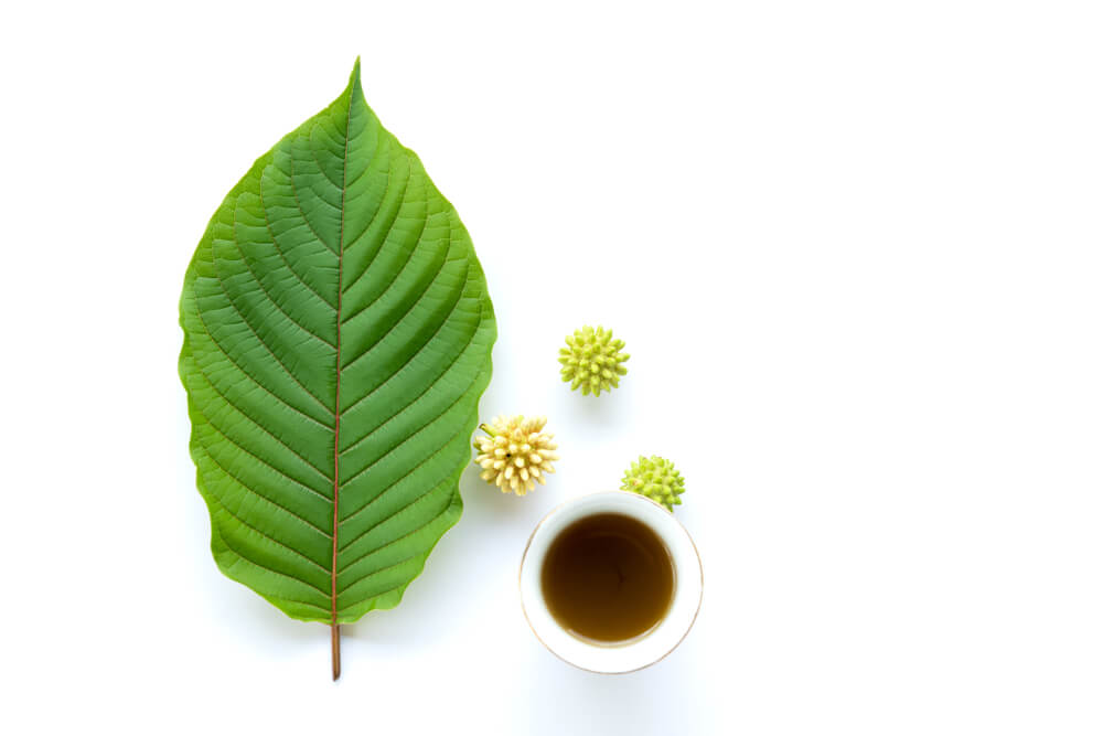 White Borneo Kratom Full Guide