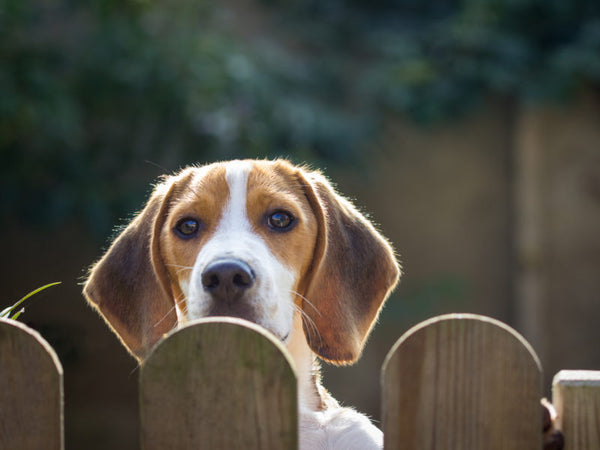 Dog Proof Your Garden Fence!