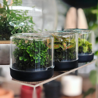 Sanctuary Recycled Mini Terrarium | Botanica Boutique