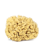 Real World Natural Sea Sponge
