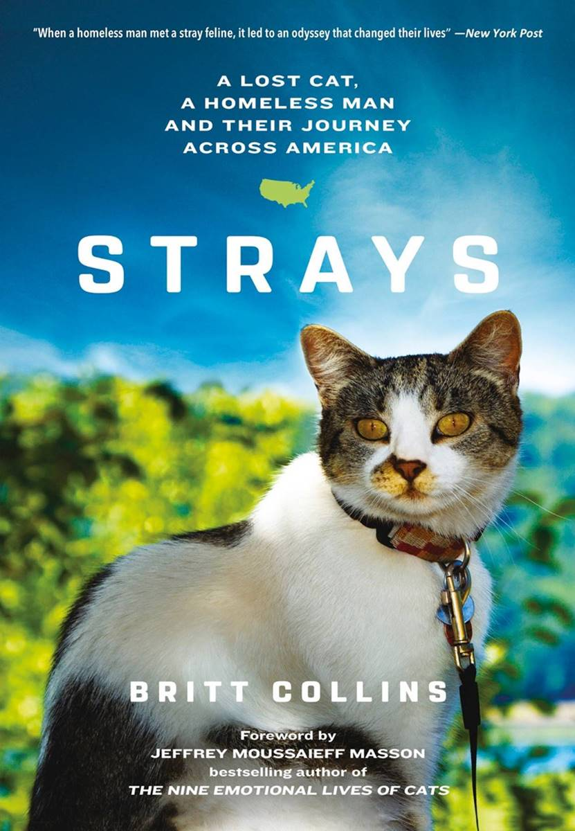 STRAYS by Britt Collins