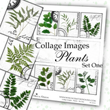 Collage Images - Plants - Set One - DI-10131 - Digital Download