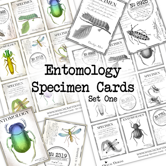 Entomology Specimen Cards - Set One - DI-10077 - Digital Download
