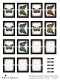 Specimen Tray Collection - Set 1 - DI-10040 - Digital Download