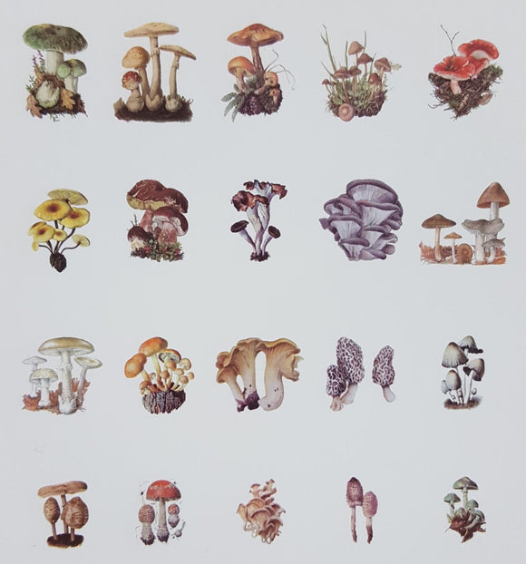 Stickers - Mushrooms - (SP-4157)