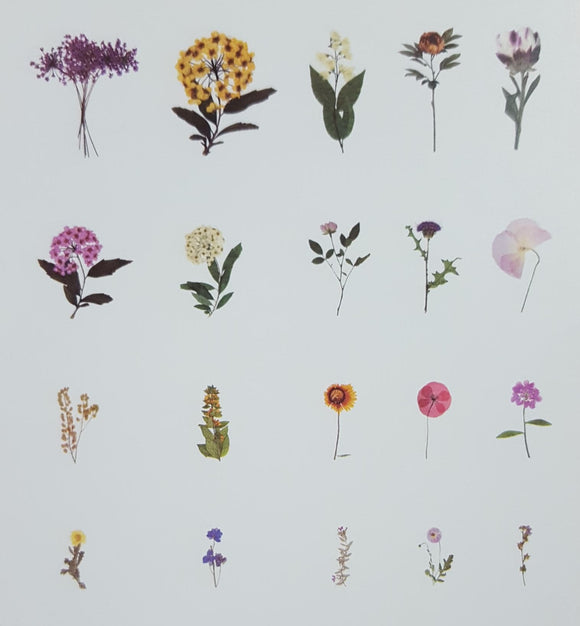 Stickers - Flowers - (SP-4158)