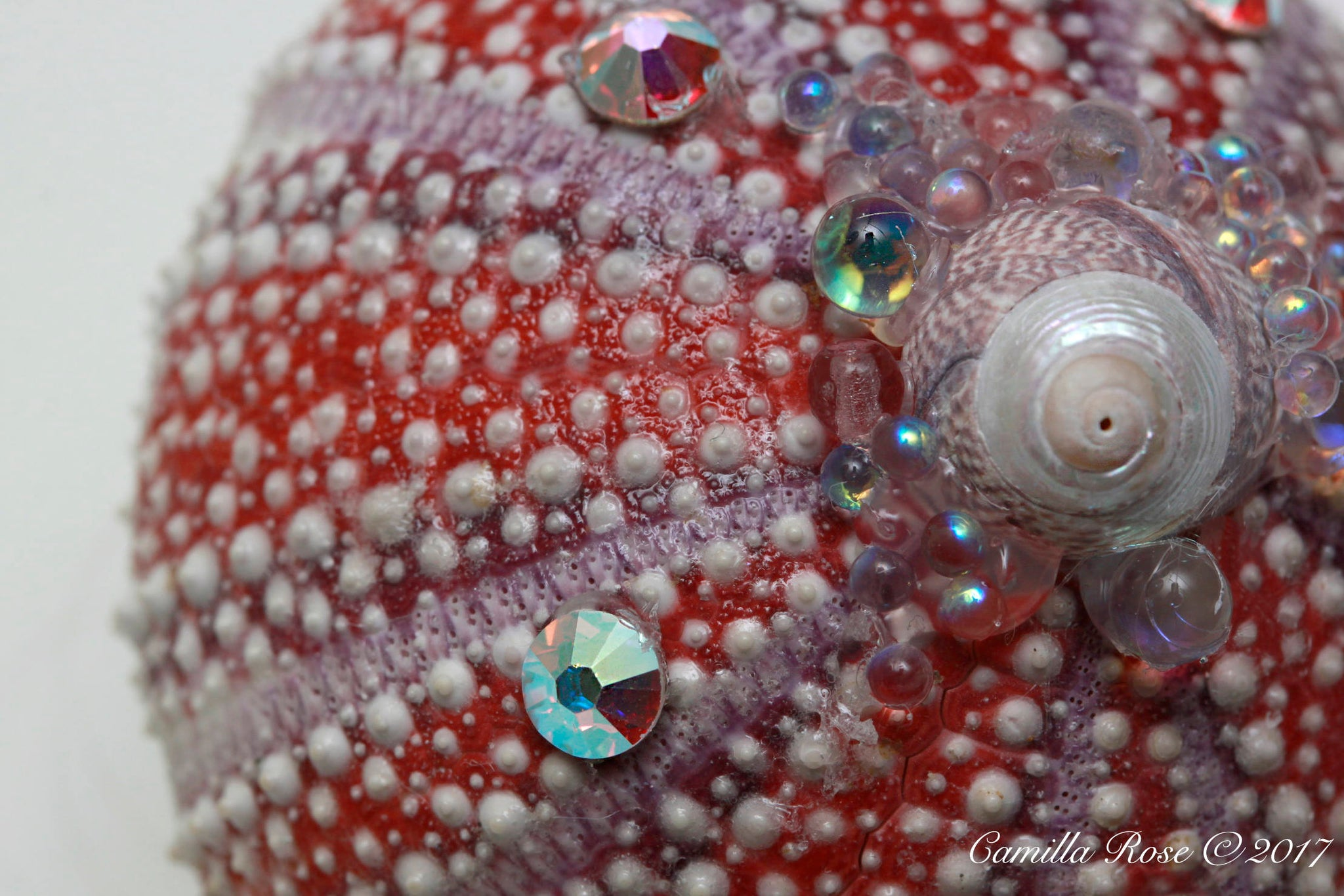Colourful Urchin Hair Clip