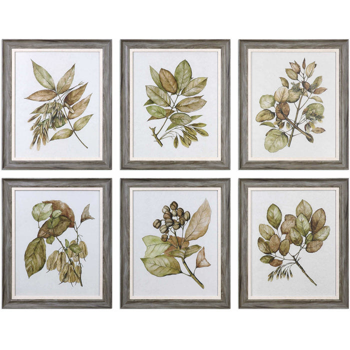 Uttermost 33643 Seedlings Framed Art Prints Set of 6