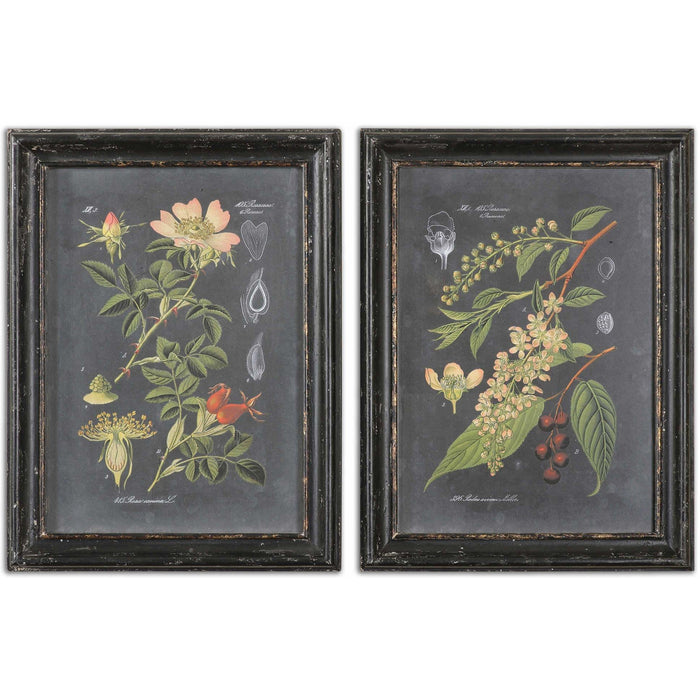 Uttermost 56053 Midnight Botanicals Framed Art Prints Set of 2