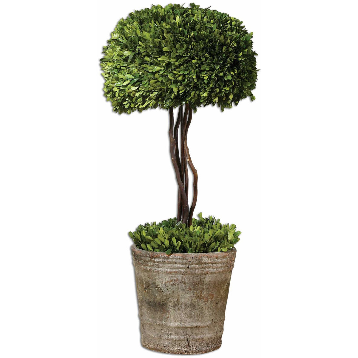 Uttermost 60095 Tree Topiary Preserved Boxwood Alcove