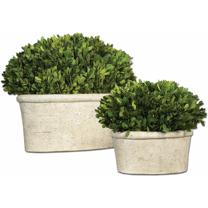 Uttermost 60107 Oval Domes Preserved Boxwood