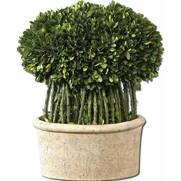 Uttermost 60108 Willow Topiary Preserved Boxwood