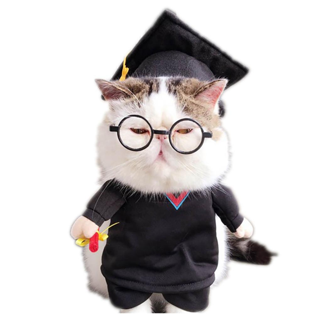 Image result for cat graduation