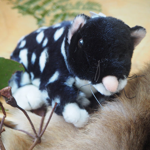Plush Quoll Black