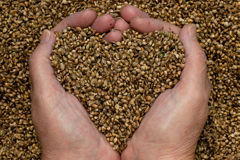Shelled Hemp seeds Merkaba NZ