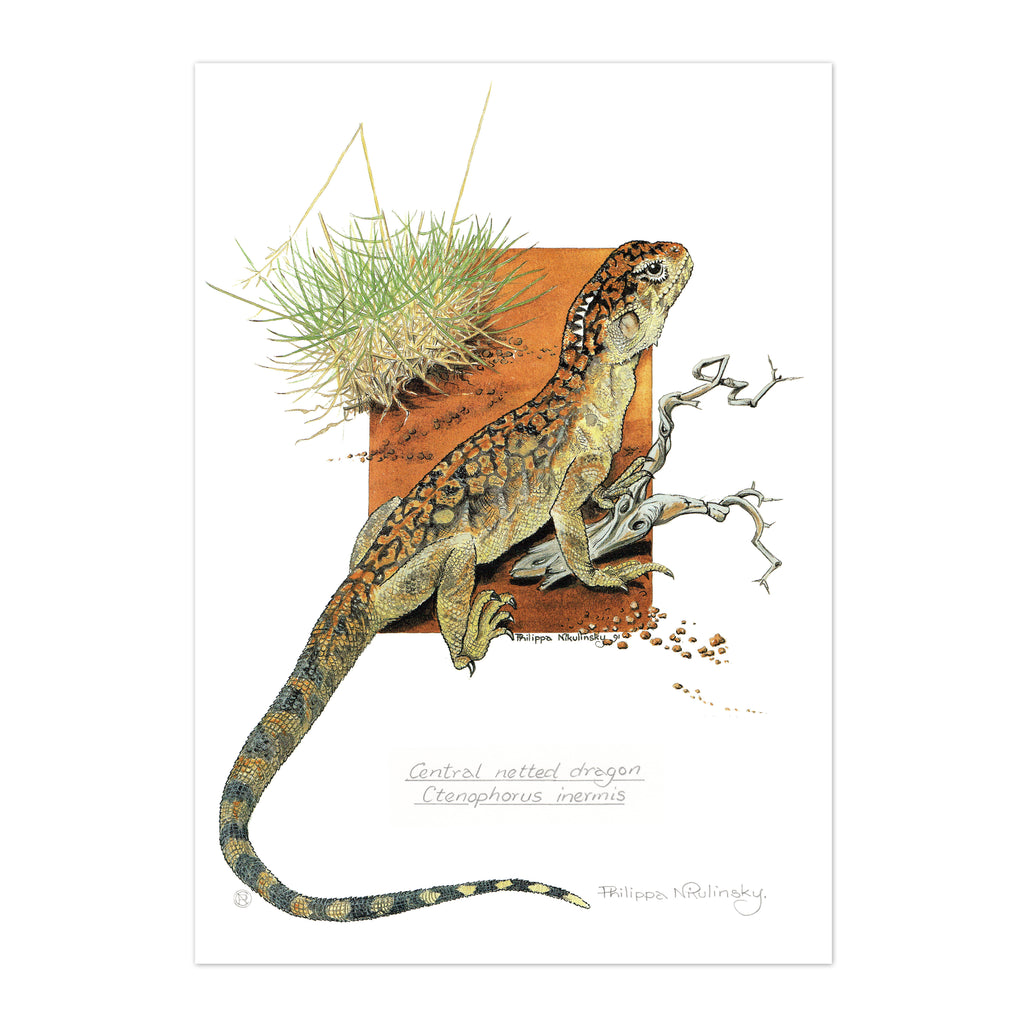 Central Netted Dragon Fine Art Print Fine Art Print painted by Philippa Nikulinsky - studio Nikulinsky